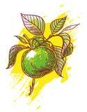 Hand dragit äpple Royaltyfri Fotografi