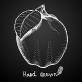 Hand dragit äpple på svart bakgrund också vektor för coreldrawillustration Arkivfoton