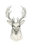 Hand dragit hjorthuvud med horn Teckningsdjuret skissar svart Arkivbilder