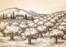 Hand dragit landskap för olivgrön dunge Arkivfoton