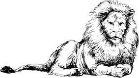 Hand dragit lejon vektor illustrationer