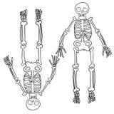 Hand dragit skelett Arkivbild