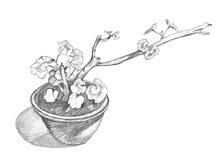 Hand-dragit skissa av pelargon Pelargonia i kruka Royaltyfri Fotografi