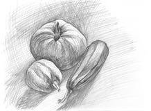 Hand-dragit skissa av pumpor och grönsakmärg Linjär grafisk illustration Arkivbilder