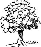 Hand dragit träd Royaltyfri Fotografi