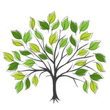 Hand draw abstract green tree, vector illustration Royalty Free Stock Photography