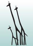 Hand draw animal giraffe. Hand drawn illustration of  three giraffes Stock Images