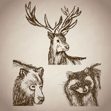 Hand draw animals forest vintage Royalty Free Stock Photo