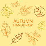 Hand Draw Autumn Leaf Stock Image