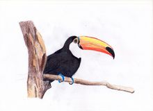 Hand draw bird. Hand drawing bird nature colored pencils Stock Photos