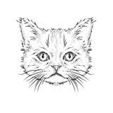 Hand draw cat portrait. Vector illustration Stock Photography