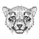 Hand draw cheetah portrait. Hand draw vector illustration Royalty Free Stock Image