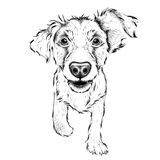 Hand draw Cocker Spaniel portrait. Hand draw vector illustration Royalty Free Stock Photo