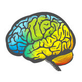 Hand Draw Colorful Brain Stock Image