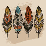 Hand draw feather set Stock Images