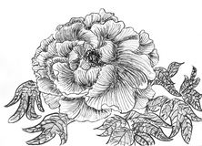 Hand draw flower Stock Images