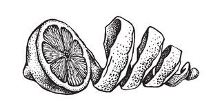 Hand draw of lemon Royalty Free Stock Photography