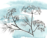 Hand draw milfoil on stem. Watercolor background Royalty Free Stock Image