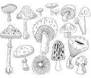 Hand Draw Mushroom Collections vector illustration