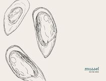 Hand draw mussels vector. Royalty Free Stock Photos