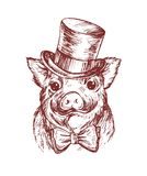 Hand draw a portrait of a little pig wearing a top hat and a the bow tie. Vector sketch illustration. Symbol of a Chinese New Year stock illustration