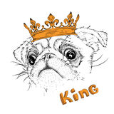 Hand draw portrait of pug in the crown. Use for print, posters, t-shirts. Vector illustration Royalty Free Stock Photography