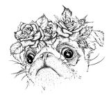 Hand draw portrait of pug wearing a wreath of flowers. Vector illustration Stock Photos