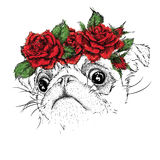 Hand draw portrait of pug wearing a wreath of flowers. Vector illustration Royalty Free Stock Photo