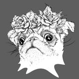 Hand draw portrait of pug wearing a wreath of flowers. Vector illustration Stock Image