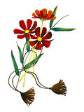 Hand draw red cosmos flowers Royalty Free Stock Photos