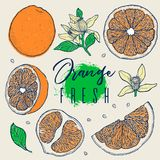 Hand draw set orange fruit. Organic fresh. Colorfull element. Vintage sketch. Drawings of whole, half and sliced ripe oranges, jui vector illustration