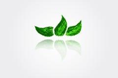 Hand draw sketch, Green Leaf Stock Photo