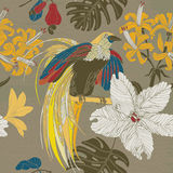 Hand draw tropical flowers and birds. Stock Photos