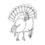 Hand draw a turkey in the style of a sketch on a Royalty Free Stock Photos