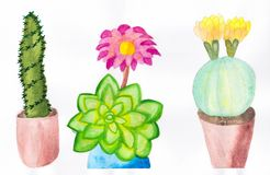 Hand draw watercolor of Three cactus illustration royalty free stock photography