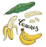 Hand drawing bananas: fruit and leaves on a white background. Stock Photography
