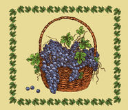 Hand drawing basket with black  ripe grape Royalty Free Stock Photos