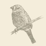Hand drawing bird Stock Photos