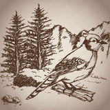 Hand drawing bird landscape vintage Stock Images