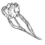 Hand drawing black and white tulip flower Stock Images