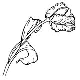 Hand drawing black and white tulip flower Royalty Free Stock Images