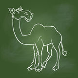 Hand drawing Camel on Green board -Vector illustration Stock Photos