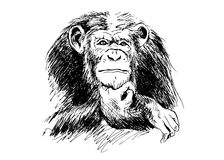 Hand drawing Chimpanzees Stock Photography