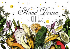 Hand drawing Citrus fruits Royalty Free Stock Photos