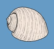 Hand drawing of a cockleshell royalty free illustration