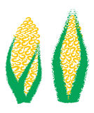 Hand drawing corn, maize, Royalty Free Stock Photo