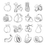 Hand drawing doodle fruits vector illustration for fruit packaging Stock Photos