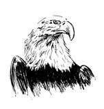 Hand drawing eagle Royalty Free Stock Image