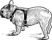 Hand drawing of an english bulldog on a walk royalty free illustration