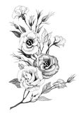 Hand drawing flower Royalty Free Stock Image